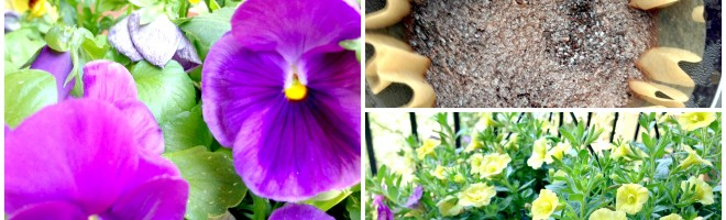 How To Make Flowers Bloom Better Using Coffee Grounds